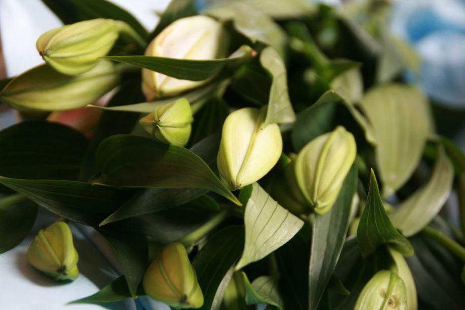 Blumenlieferung von Bloomy Days